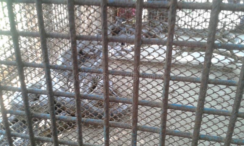 Serpente fotos de stock