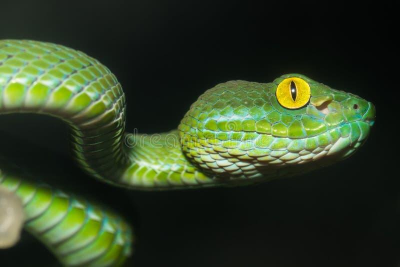 A serpente foto de stock