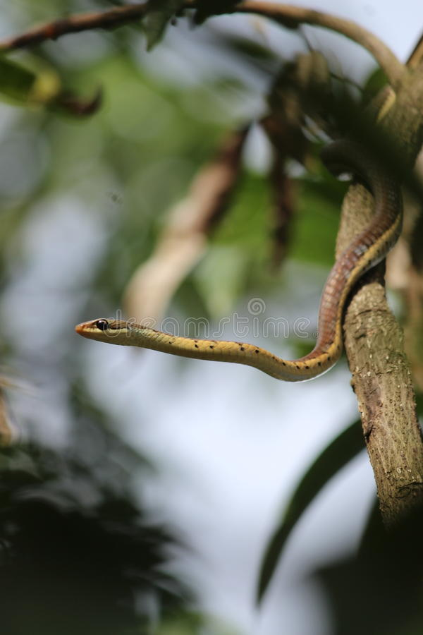 Serpente 2 imagem de stock