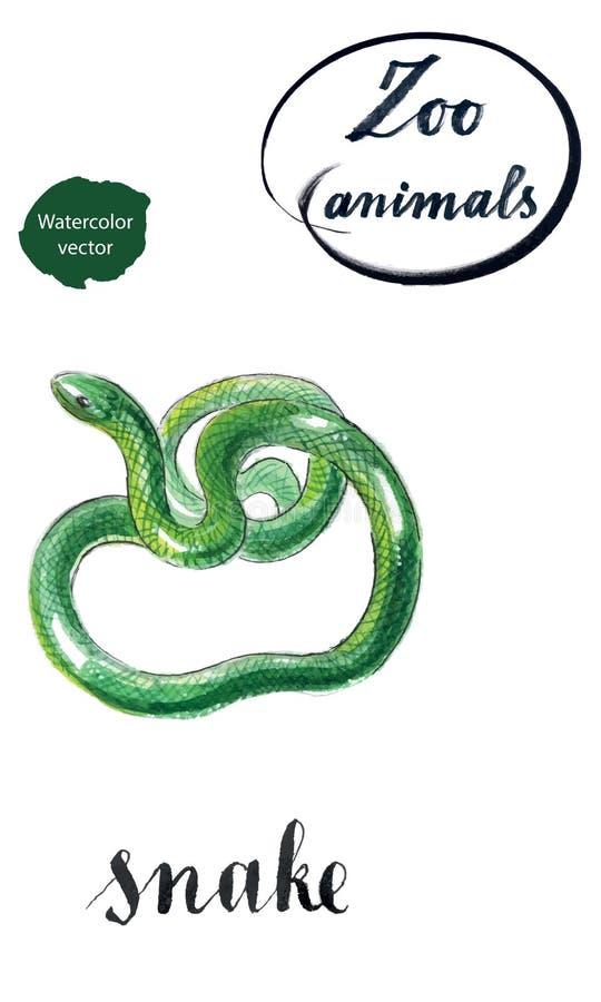 Serpente arrotolato verde illustrazione vettoriale