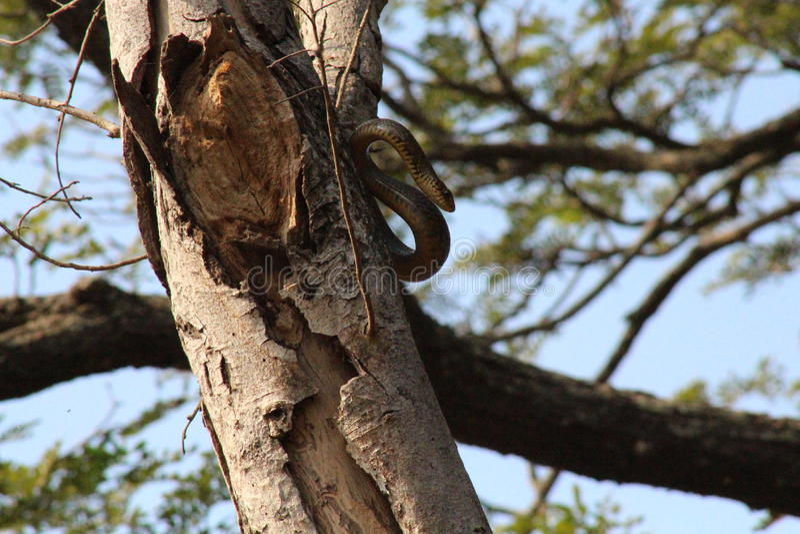 Serpente bonita nas madeiras fotografia de stock