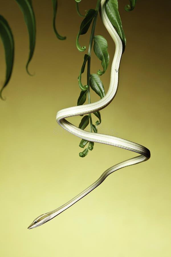 Serpente da árvore imagem de stock