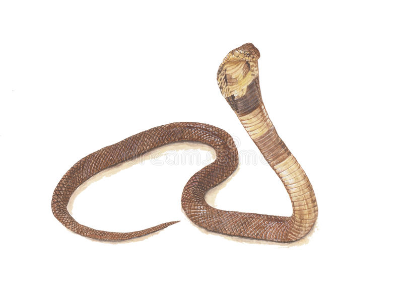 Serpente da cobra foto de stock royalty free