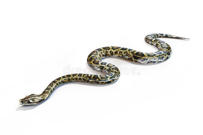 Serpente das anacondas ilustração stock