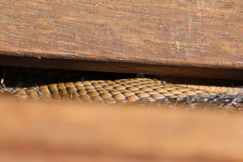 A serpente de Brown escala na etapa fotos de stock