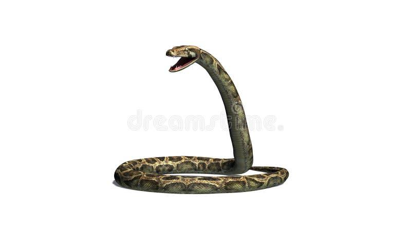 Serpente del pitone nella difesa fotografia stock
