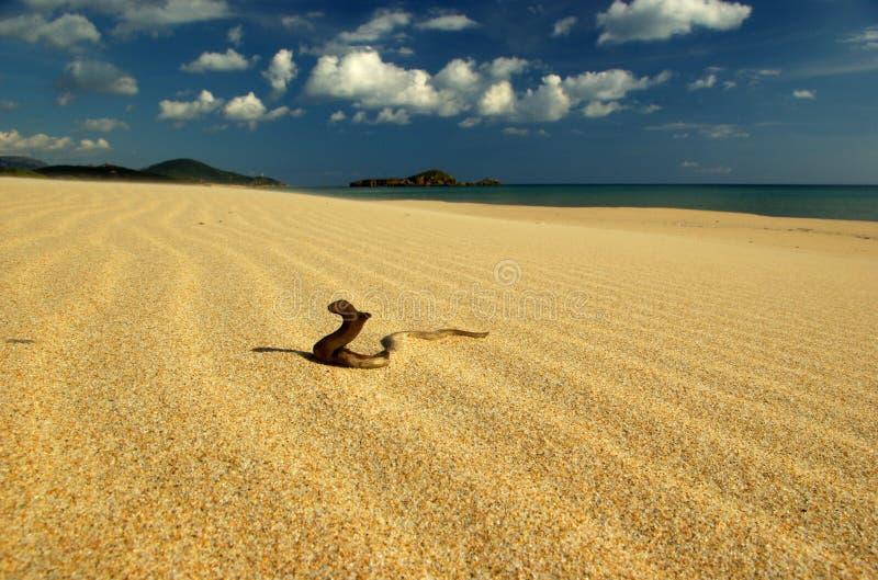 Serpente di legno divertente alla spiaggia di Chia fotografie stock libere da diritti