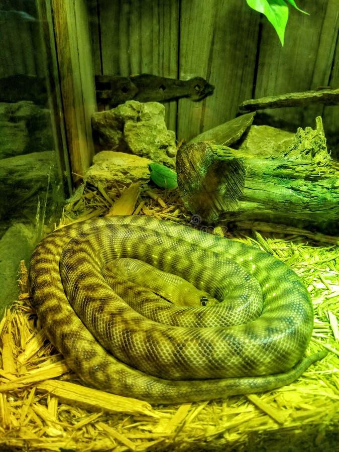 Serpente em uma bobina fotos de stock