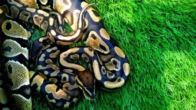 Serpente modellato immagini stock libere da diritti