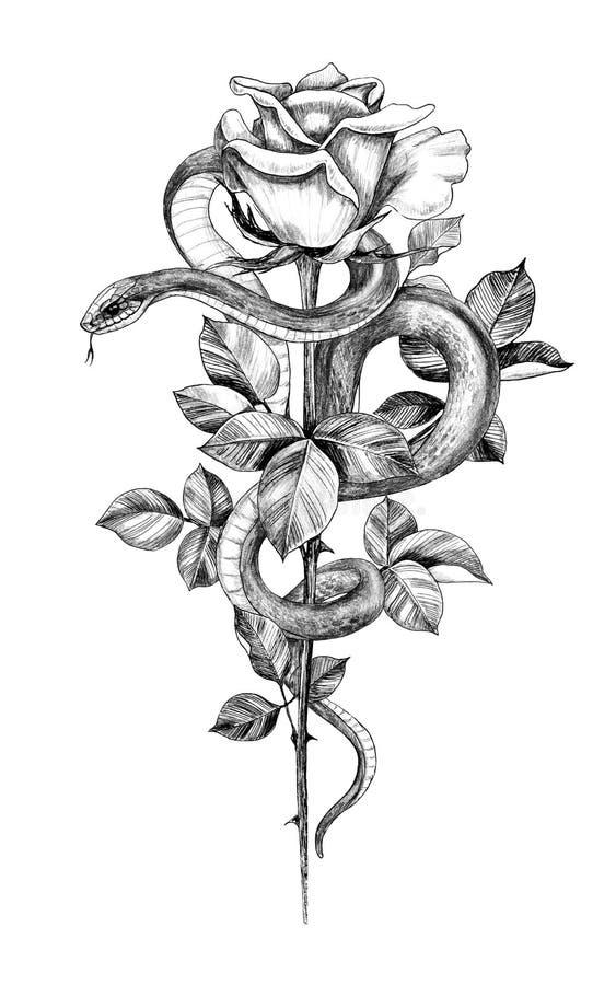 Serpente monocromática tirada mão com Rosa ilustração stock