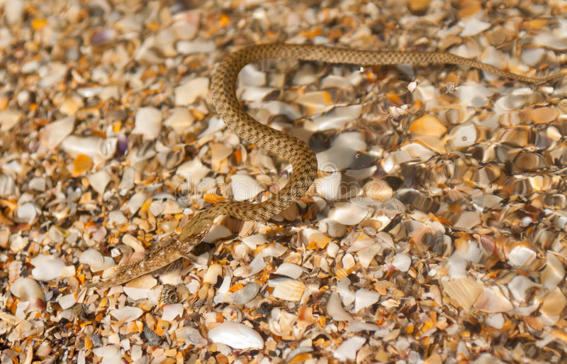 Serpente na água imagem de stock royalty free