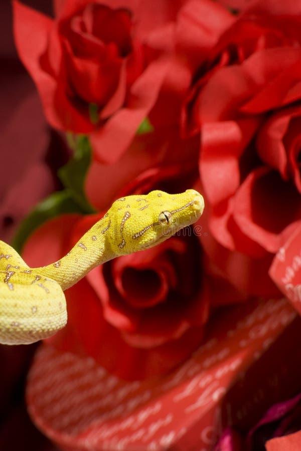 Serpente nas rosas