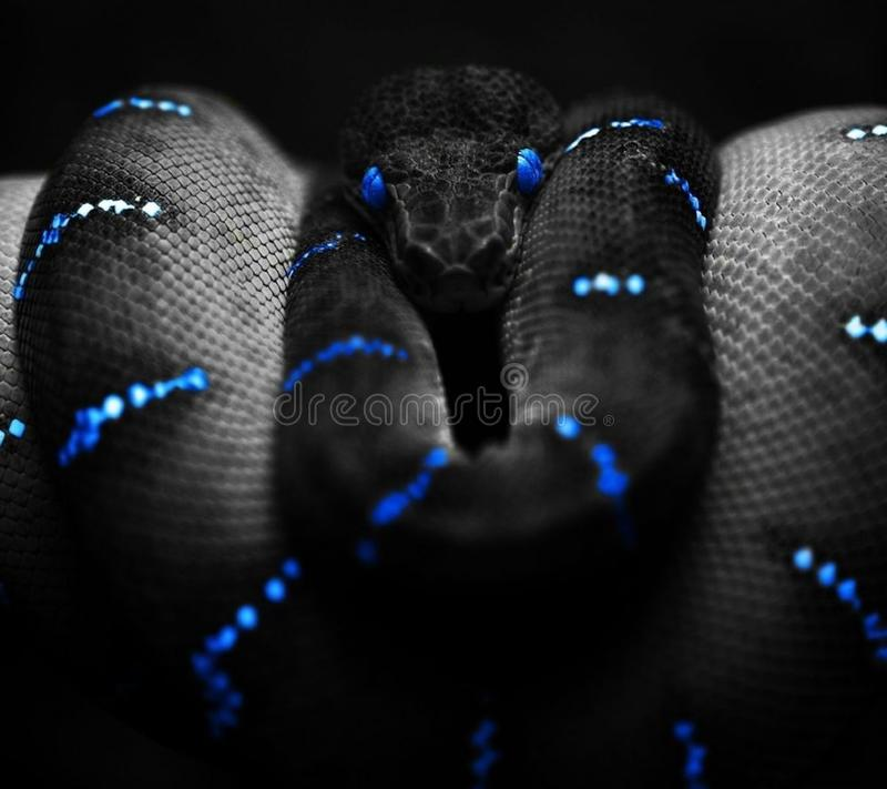 Serpente nero immagine stock libera da diritti