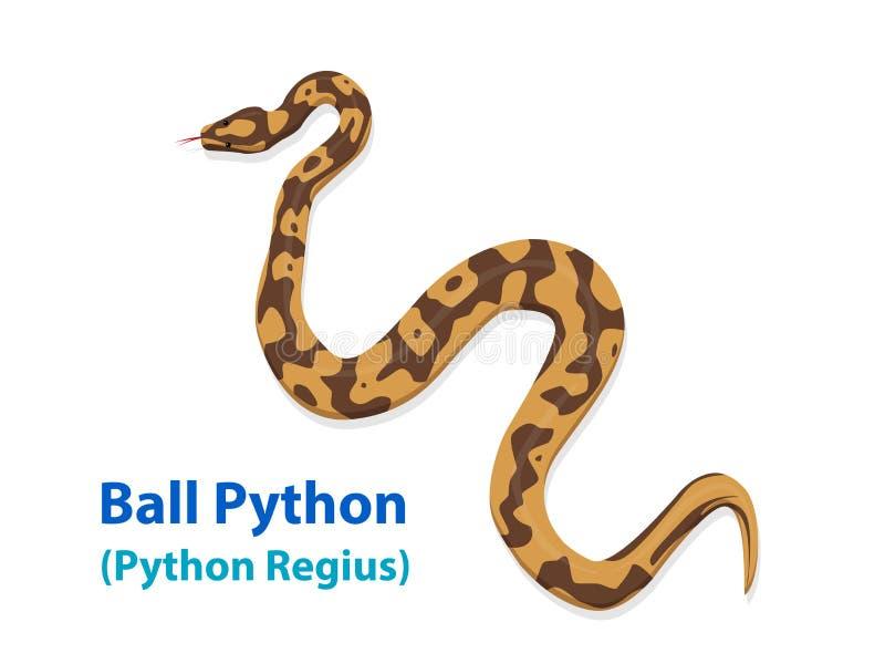Serpente realística do pitão da bola na opinião superior da arte do vetor ilustração stock