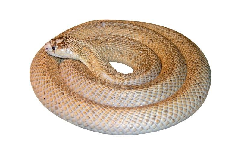 Serpente redonda perfeita imagem de stock