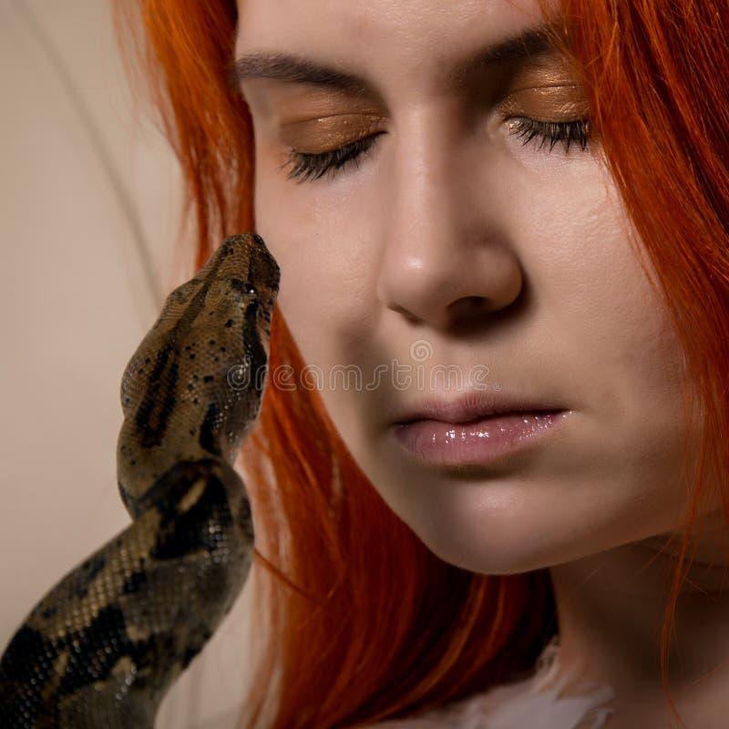 Serpente 'sexy' da terra arrendada da mulher do ruivo menina da foto do close-up com pitão do pigmeu em um fundo branco imagem de stock