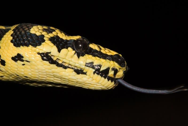 Serpente Tounge imagens de stock