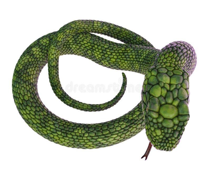 Serpente verde gigante em um fundo branco ilustração do vetor
