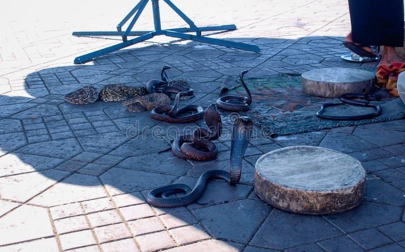 Serpenti nel quadrato EL-Fnaa a Marrakesh fotografia stock libera da diritti