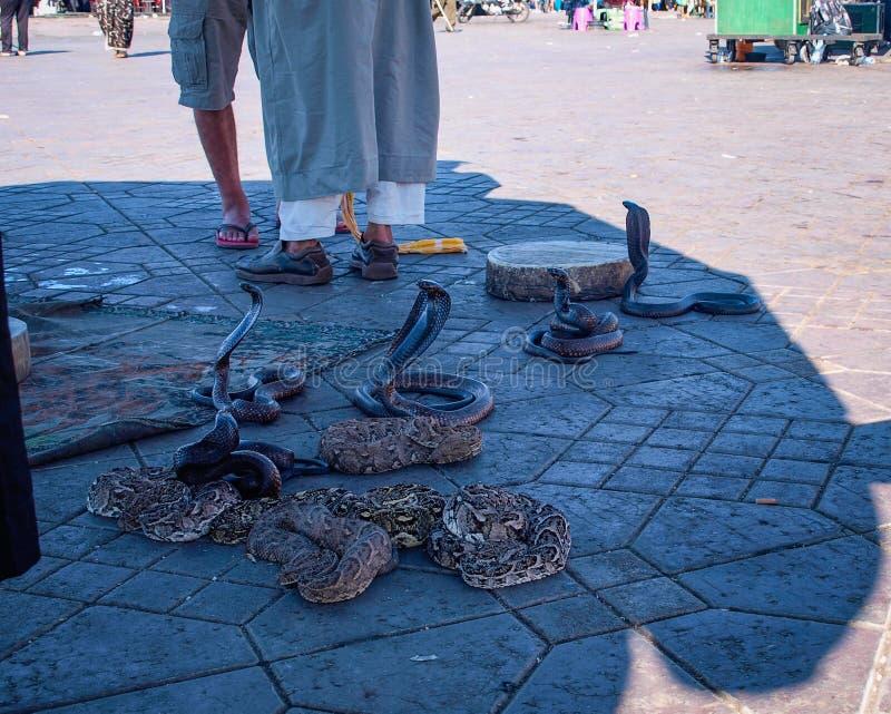 Serpenti nel quadrato EL-Fnaa a Marrakesh fotografie stock