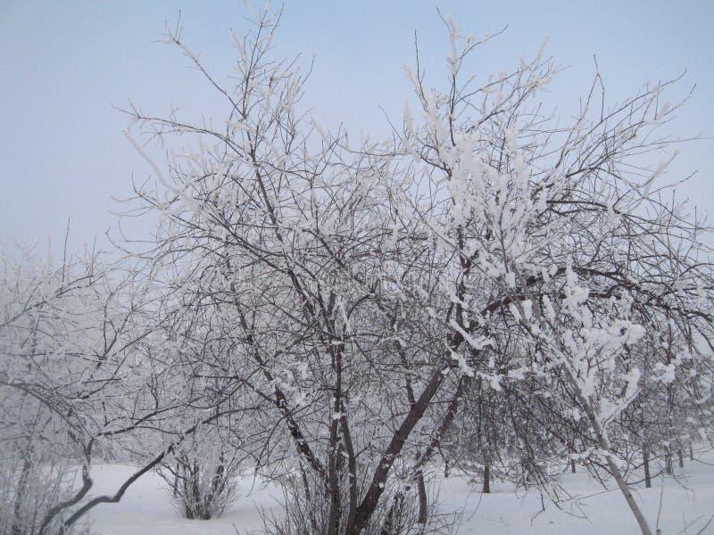 Serpentine γιρλαντών χριστουγεννιάτικων δέντρων παιχνιδιών Χριστουγέννων διακοπών παγετού στοκ φωτογραφίες με δικαίωμα ελεύθερης χρήσης