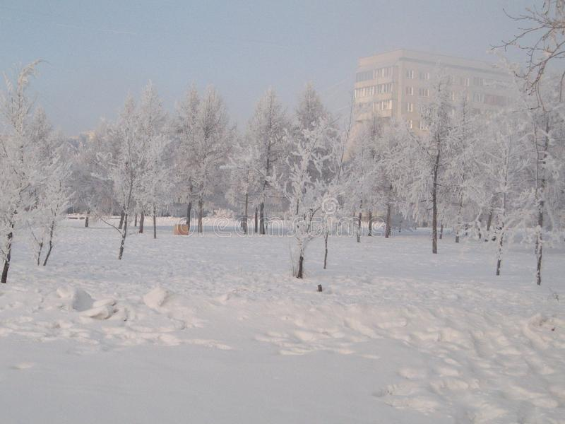 Serpentine γιρλαντών χριστουγεννιάτικων δέντρων παιχνιδιών Χριστουγέννων διακοπών παγετού στοκ εικόνες με δικαίωμα ελεύθερης χρήσης