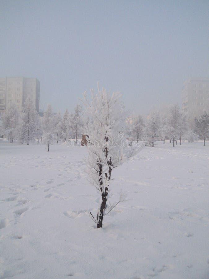 Serpentine de guirlande d'arbre de Noël de jouet de Noël de vacances de Frost photographie stock libre de droits
