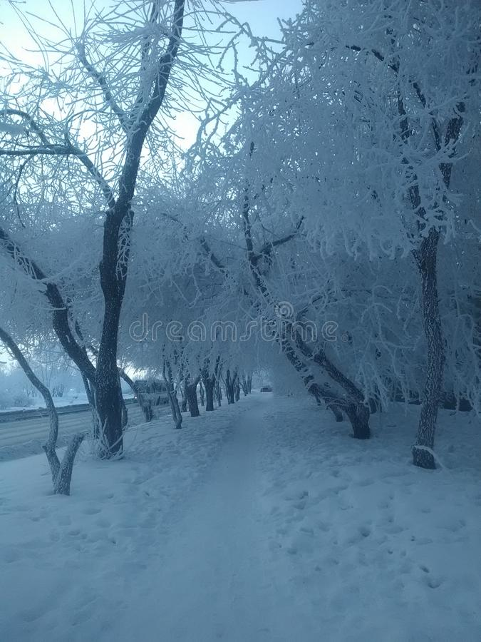 Serpentine de guirlande d'arbre de Noël de jouet de Noël de vacances de Frost photos libres de droits