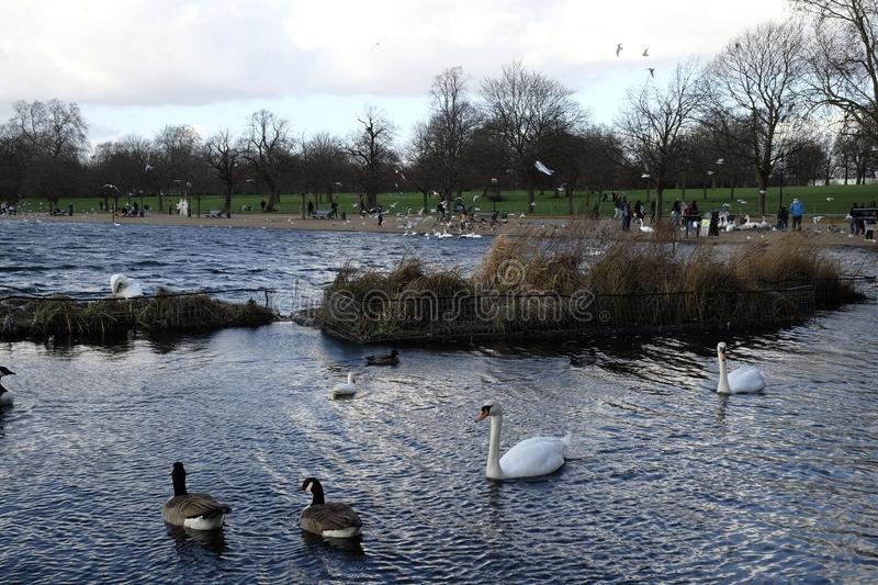 View of The Serpentine, Hyde Park, London,UK. The Serpentine, a recreational lake, very popular with tourists and local people stock image