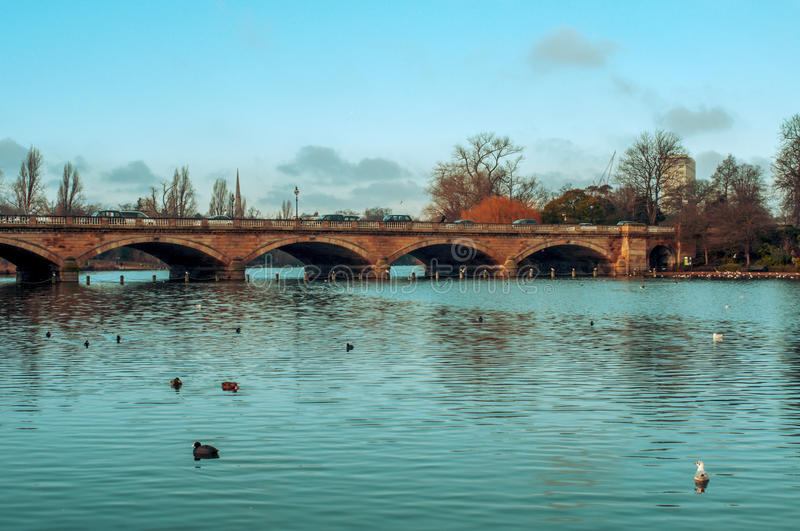 Serpentine River in Hyde Park in London, United Kingdom. Some ducks swim in the Serpentine River, with the Serpentine Bridge in the background, in Hyde Park in stock images