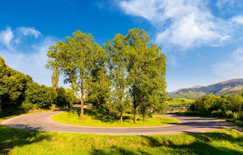 Serpentine road turnaround among tall trees stock photo