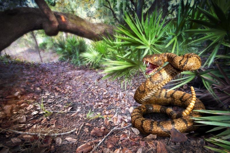 Serpiente de cascabel imagen de archivo libre de regalías