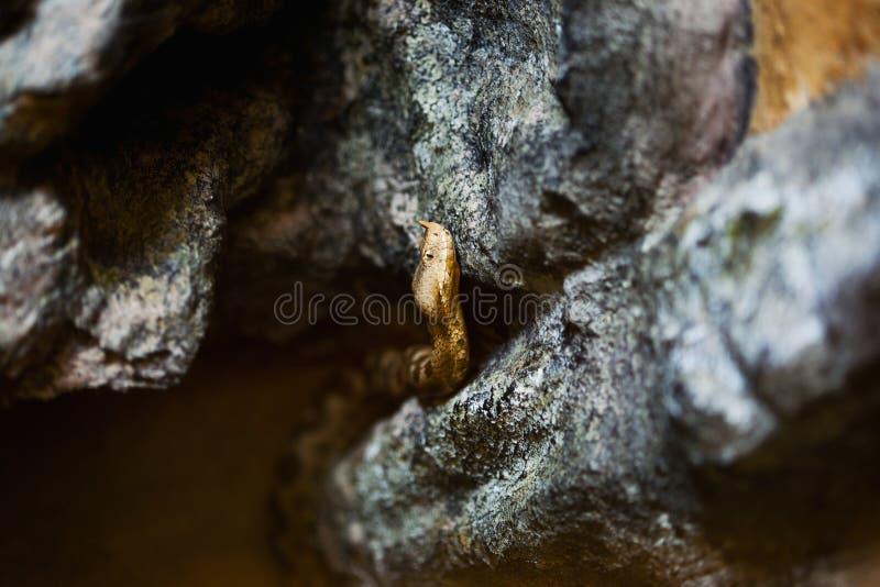 Serpiente de cuernos imagen de archivo