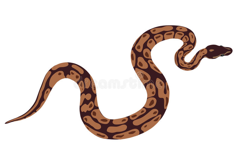 Serpiente de la boa libre illustration