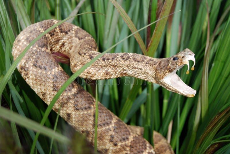 Serpiente disimulada foto de archivo