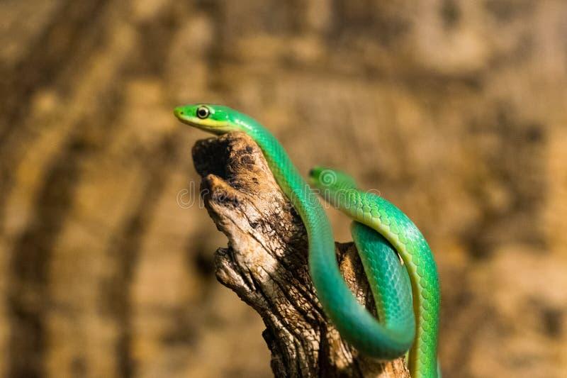 Serpiente en el parque zool?gico imagenes de archivo