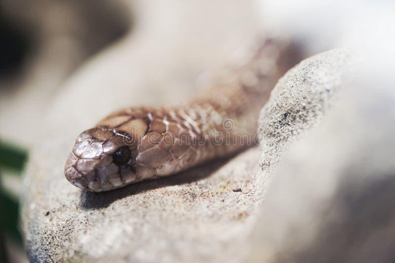 Serpiente en naturaleza fotografía de archivo