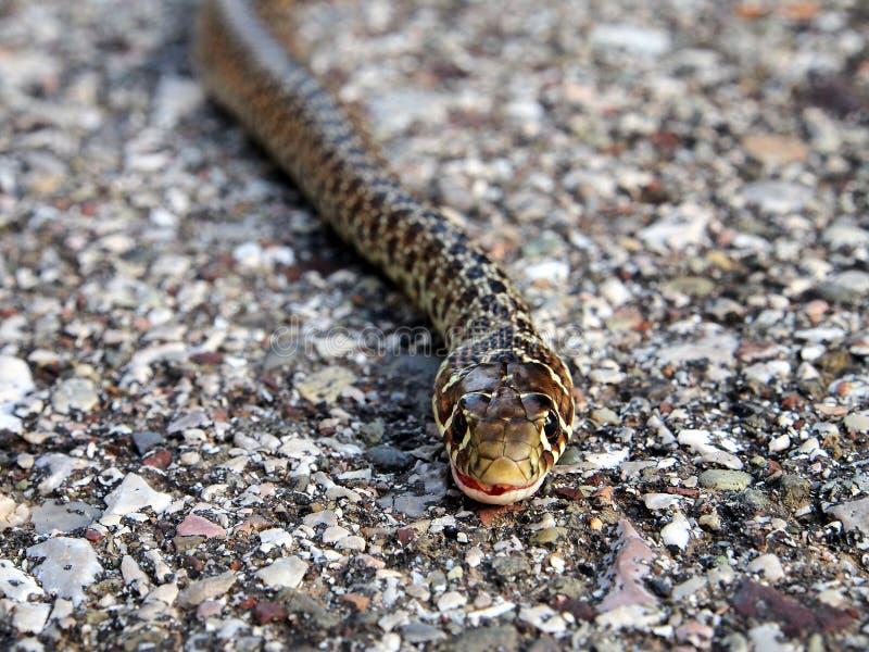 Serpiente europea imagenes de archivo