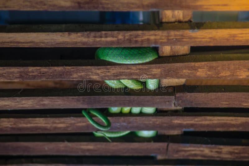 Serpiente verde foto de archivo