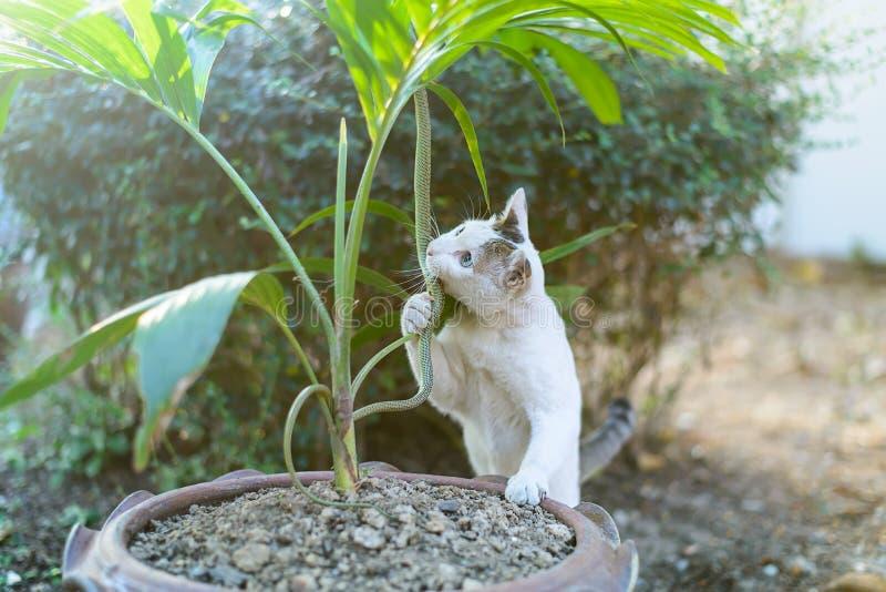 Serpiente verde de la pelea de gatos blanca en el jardín sucio desordenado, peligro fotografía de archivo