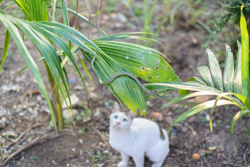 Serpiente verde de la pelea de gatos blanca en el jardín sucio desordenado, peligro foto de archivo libre de regalías