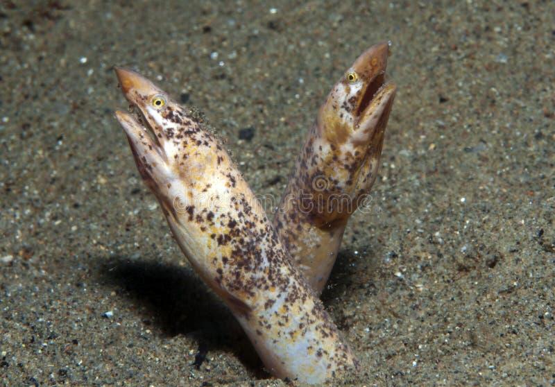 Serpientes de mar imágenes de archivo libres de regalías