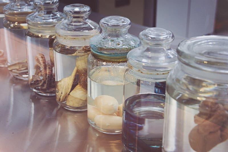 Serpientes en un laboratorio de ciencia foto de archivo libre de regalías