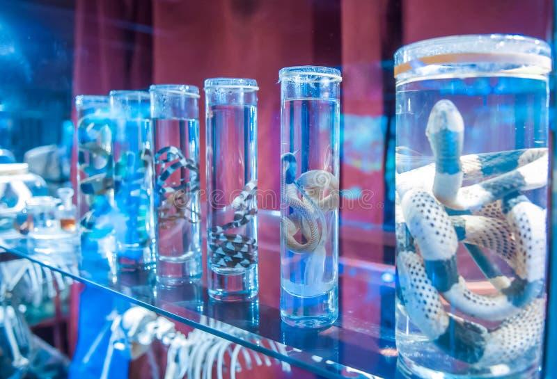 Serpientes preservadas foto de archivo