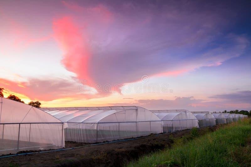 Serra in azienda agricola al tramonto fotografia stock