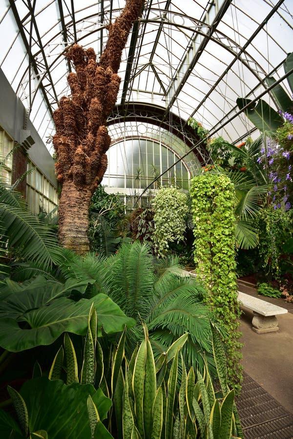 Serra con le piante tropicali immagine stock immagine di for Piante di lamponi acquisto