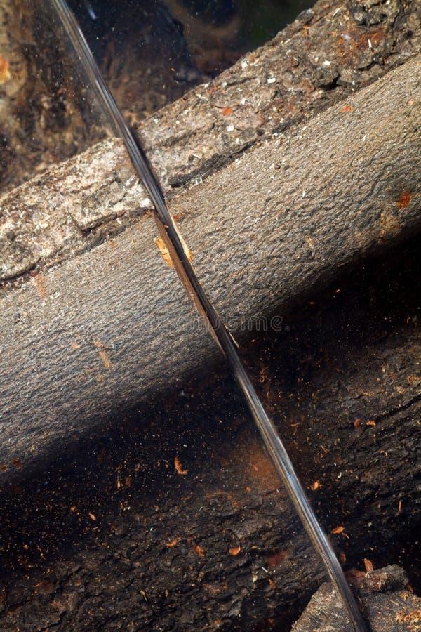 Serra de cadeia do detalhe que corta a madeira da alfarroba imagem de stock
