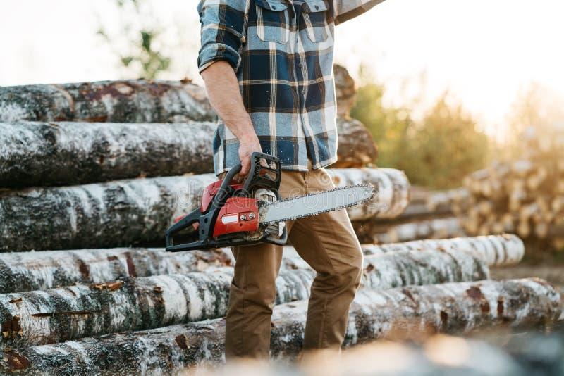 Serra de cadeia vestindo da posse da camisa de manta do lumberman farpado profissional à disposição no fundo da serração foto de stock royalty free