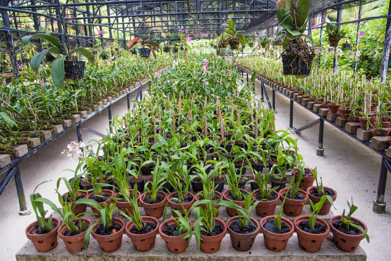 Serra dei fiori dell'orchidea fotografia stock libera da diritti