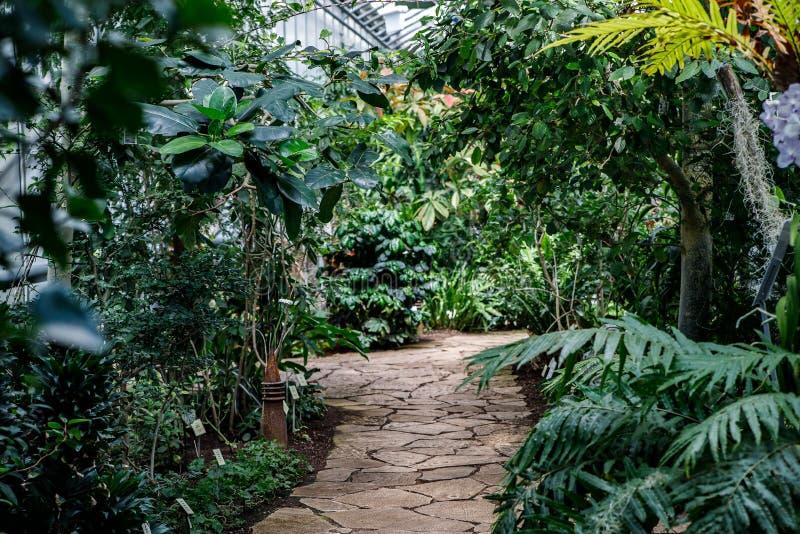 Serra per le piante verdi calore con differenti alberi e fiori immagine stock